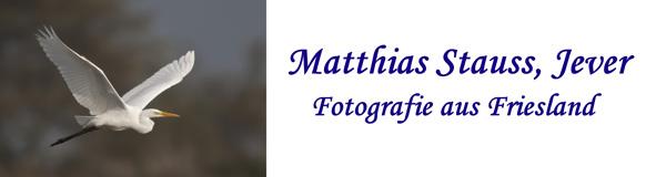 Matthias%20Stauss_klein.jpg