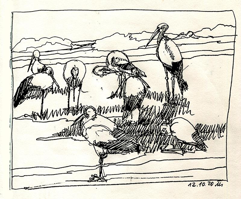 Storchenversammlung. © Manfred Schlösser