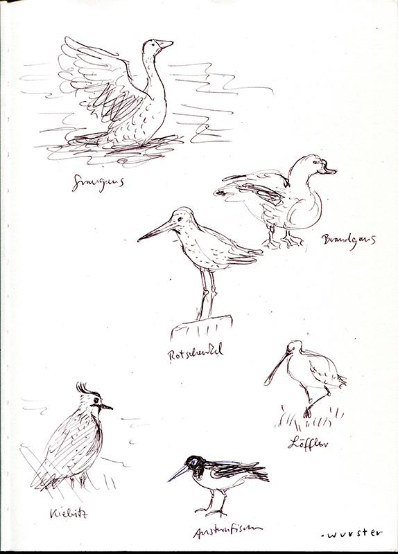 Zugvogel-Studien. © Miriam Wurster