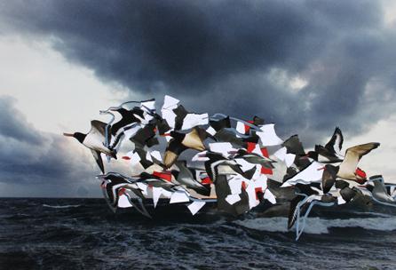Collage mit Austernfischern