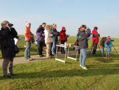Vogelbeobachtung am Osthafen