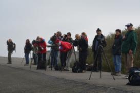 Zugvogelbeobachtung auf Borkum_Andreas Laumann